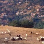 προβατάκια